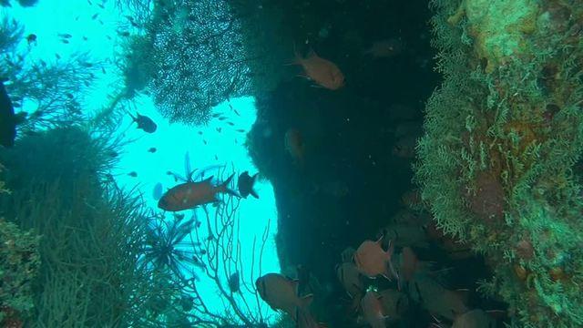 Faszination Korallenriff - Jäger und Gejagte Video 3