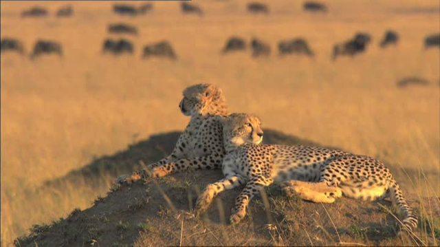 Serengeti Video 9